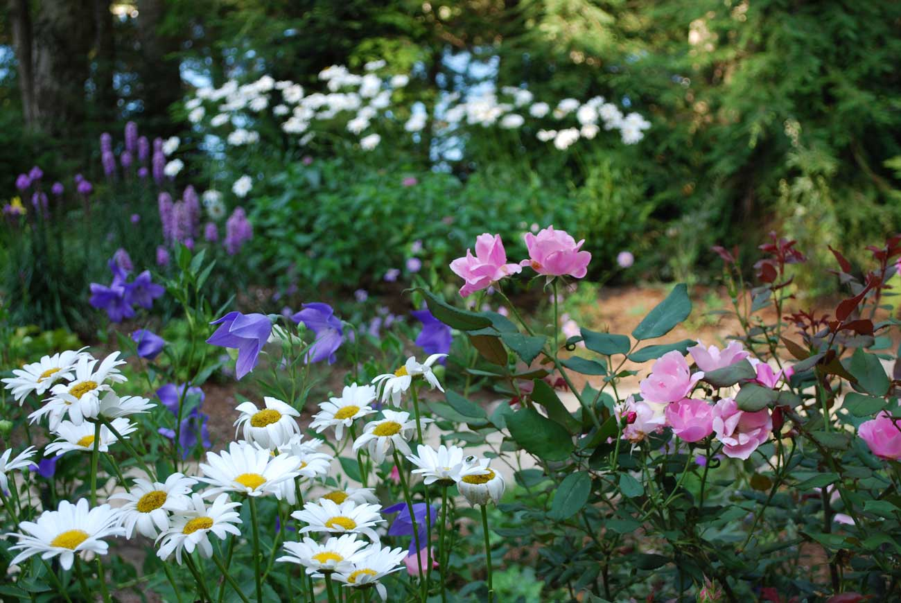 mix of flowers in garden