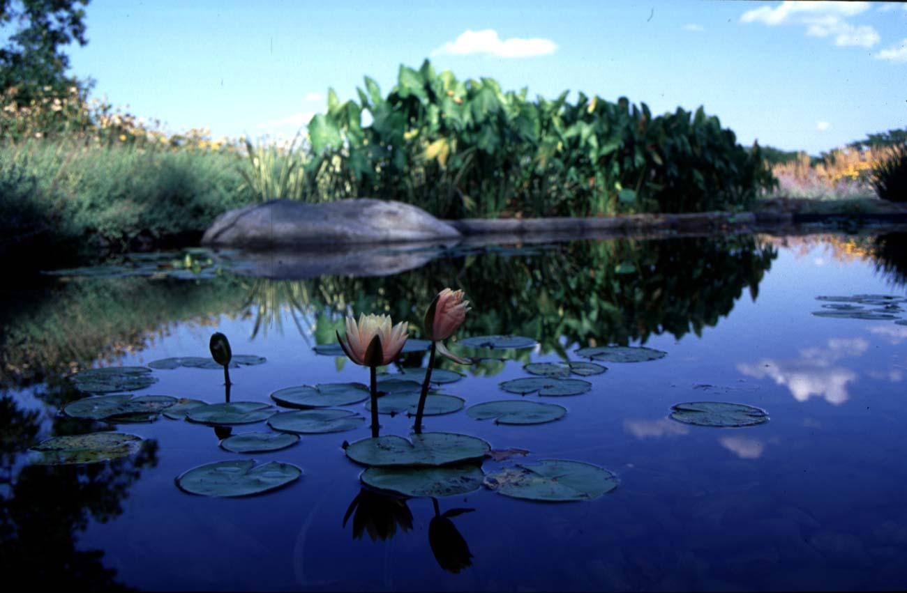 Lily Pond landscape architecture